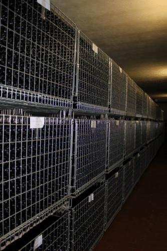 Caveau de stockage des bouteilles du Domaine Poliziano à Montepulciano en Toscane