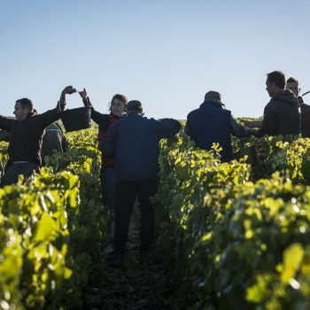 Findabbotle_Vendanges_Chablis