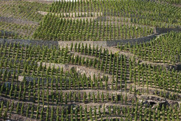 Vignobles des Côtes-Roties