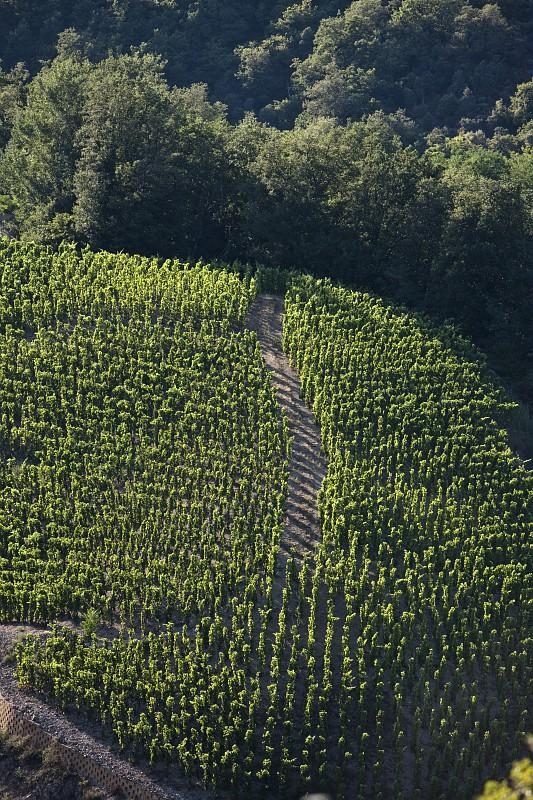 Vignobles de Saint-Joseph