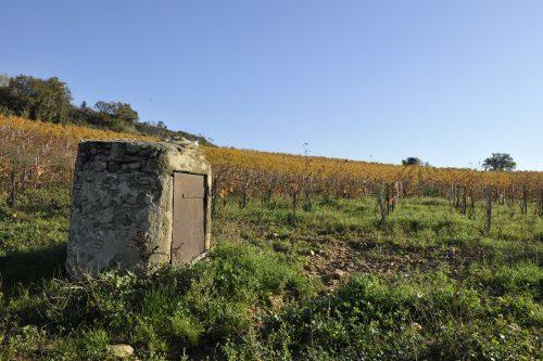 Vignoble du Clos du Mont-Olivet