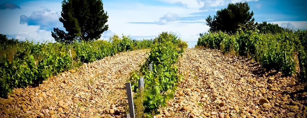 Find a Bottle - Vignoble de Chateauneuf du pape