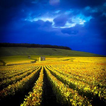 Vignobles de Champagnr