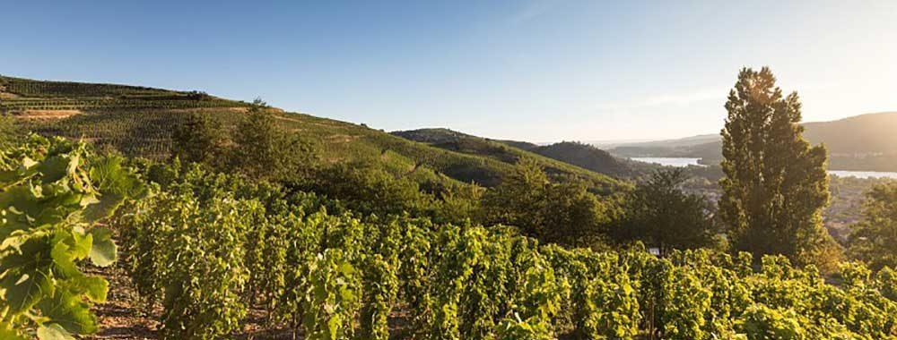 Vignoble de Saint Joseph