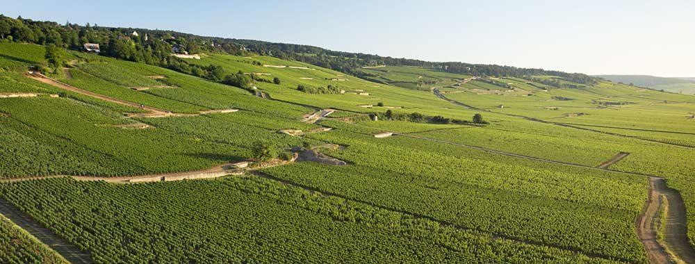 Vignoble de la Côte de Beaune