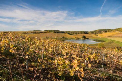 Vignoble de Chablis du domaine des Malandes