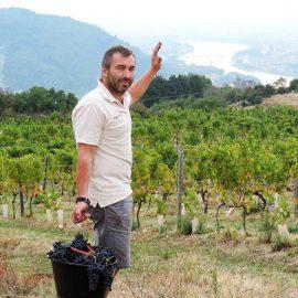 Vignoble du domaine Michelas St Jemms
