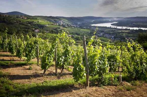 Vignoble du Domaine Pierre Gaillard