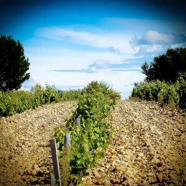 Vignoble du Clos de Mont-Olivet