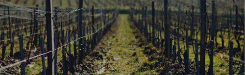 Vignoble du Domaine de la Pinte