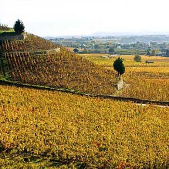 © Inter Rhône Vignoble de Crozes-Hermitage