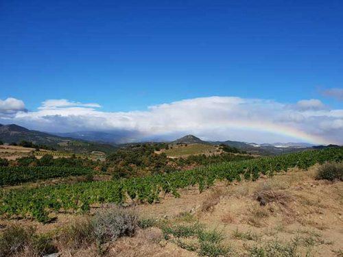 Vignoble du Domaine Modat en Côtes du Roussillon