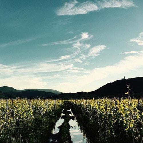 Vignoble du Domaine Achillée