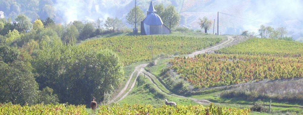 Vignoble du Beaujolais et Chapelle de Marchampt