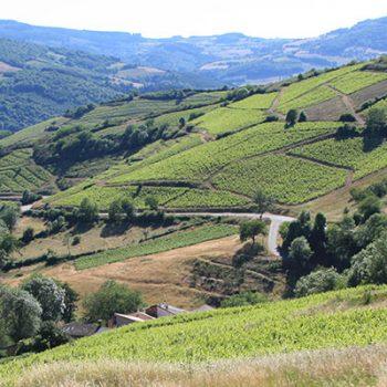 Vignoble et vins du Beaujolais