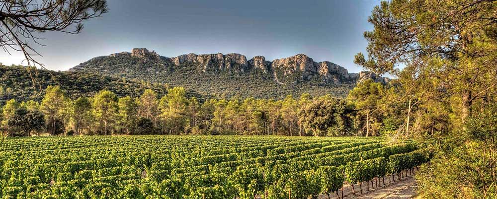 Vignoble et vins du Languedoc