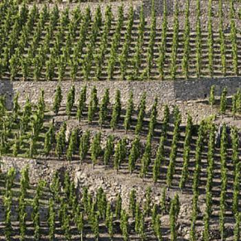 Vignoble de la vallée du Rhône