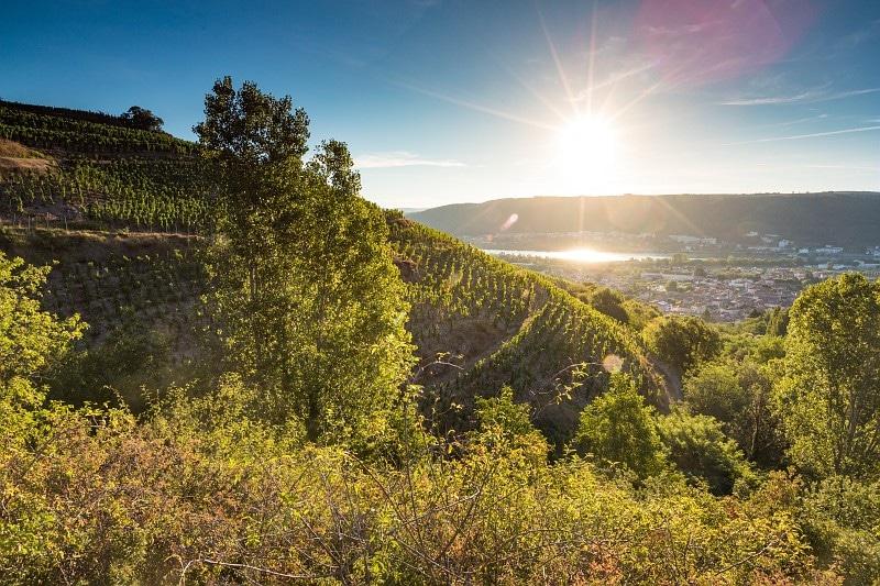 Vignoble de vallée du Rhône