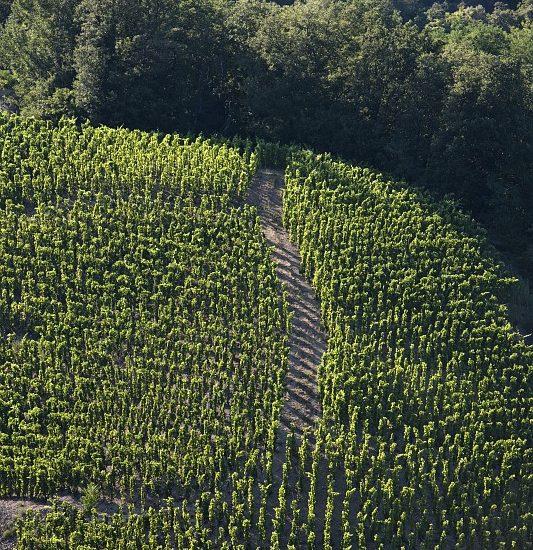 Vignoble de Saint-Joseph en Vallée du Rhône