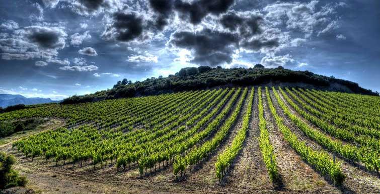 Vignoble du Languedoc à Fitou